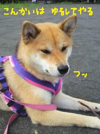ichi-docomo-8.jpg