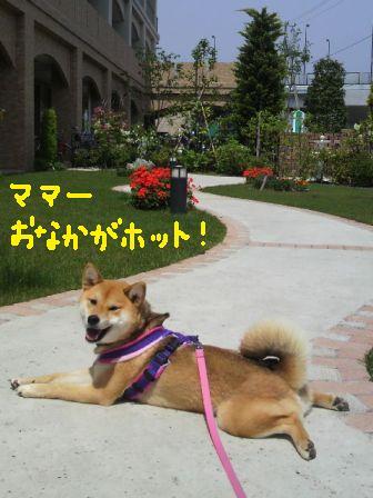 ichi-docomo-v.jpg