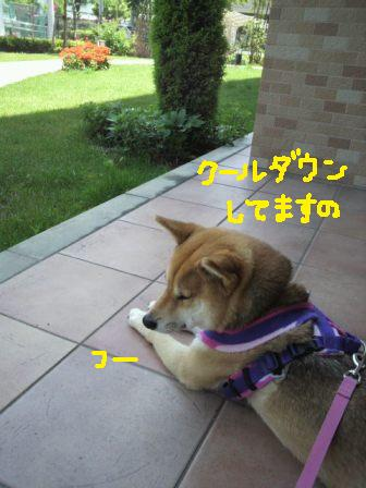 ichi-docomo-z.jpg