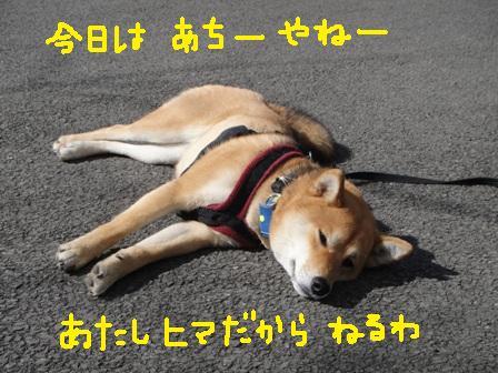 ichi49i.jpg