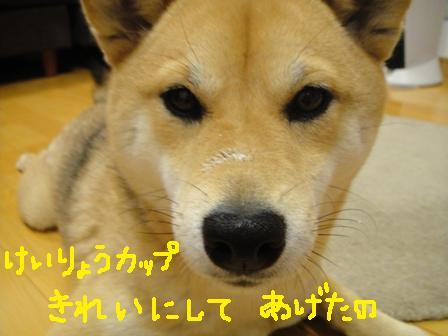 ichi50-a.jpg