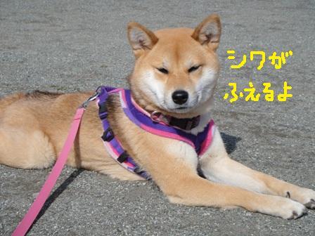 ichi50-b.jpg
