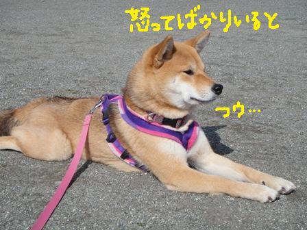 ichi50-c.jpg