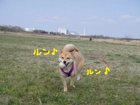 ichi50-f.jpg