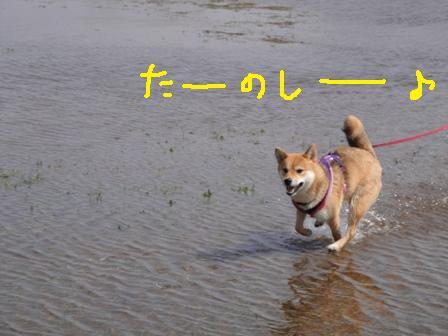 ichi50-k.jpg