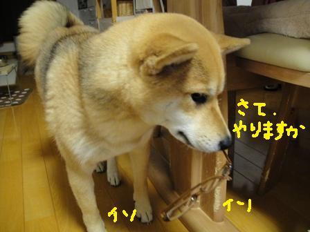 ichi52n.jpg