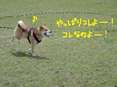 ichi57l.jpg