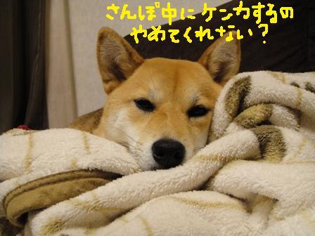 ichi60l.jpg