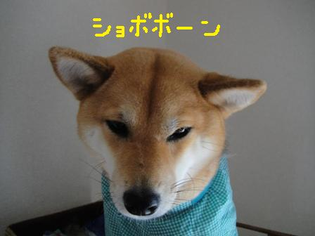 ichi61c.jpg