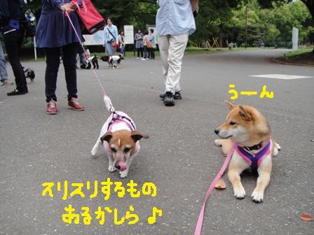 ichi62c.jpg