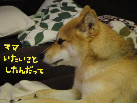 ichi74o.jpg
