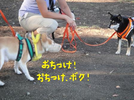 ichi81a.jpg