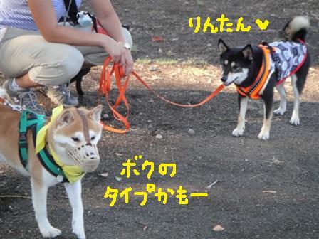 ichi81b.jpg