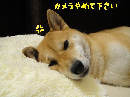 ichi82p.jpg