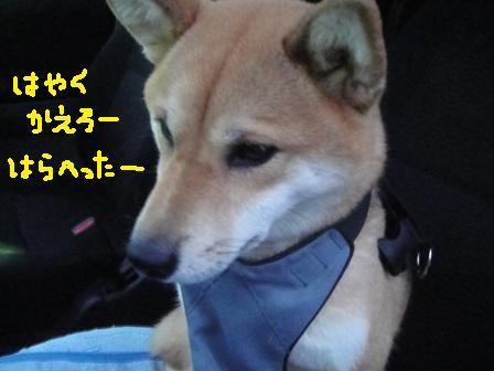 ichi82r.jpg