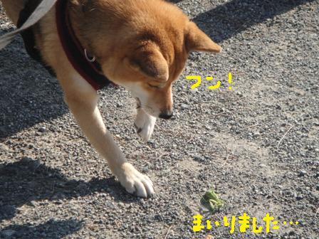 ichi88b.jpg