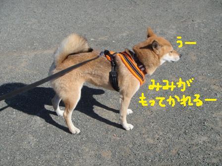 ichi89g.jpg