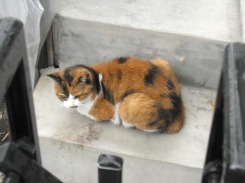 本日の・・・、ネコ発見。