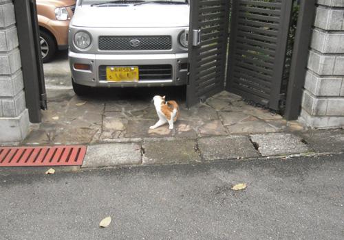 ネコ発見その1。