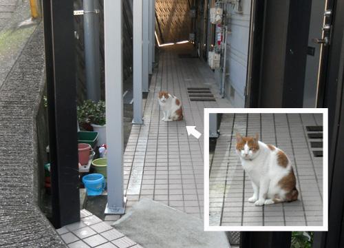 今日の猫2。
