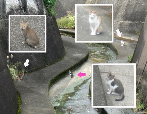 ネコ3匹発見!