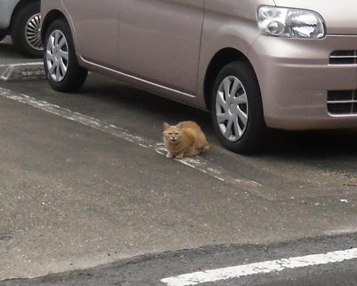 ネコ発見その2!