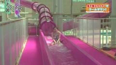 江藤愛アナ水着ウォータースライダー画像2
