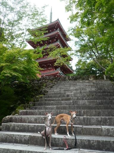 総檜造りで高さ 31.2M。鎌倉時代の様式を取り入れたもの