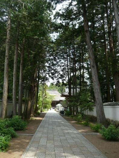 杉に囲まれた参道。こんな風景大好き♪