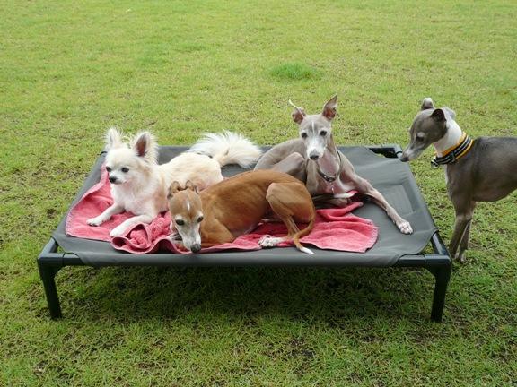 モン卓と一緒にキャンプに行ったら、トトがコットを占領してしまいそう。。