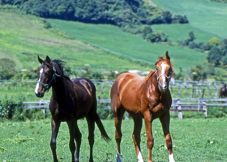 horse-2SX.jpg