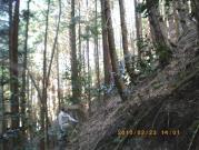 深山林道1