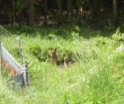 野良犬 20100529 1