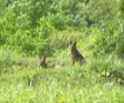 野良犬 20100529 2