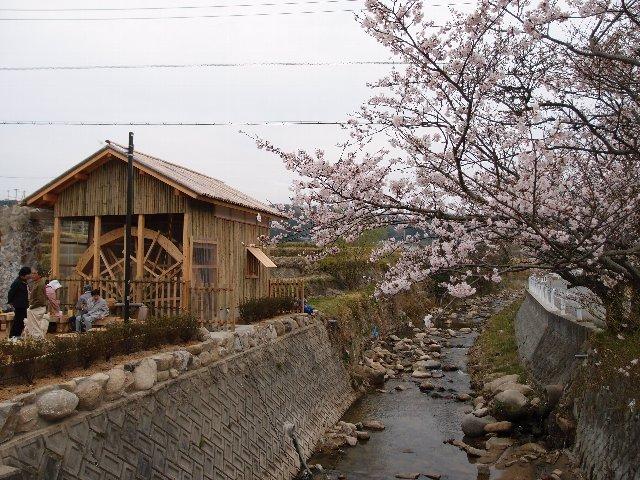 120410水車と川と桜