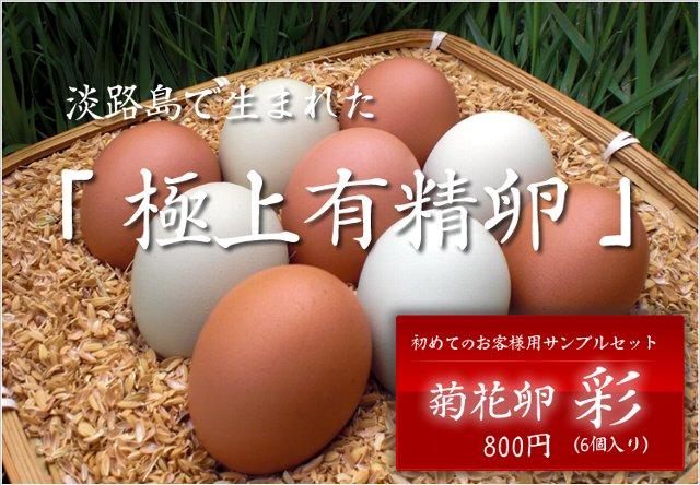 120425菊花卵