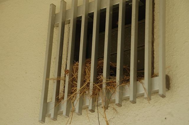120507雀の巣