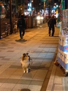 20140202三田通の犬