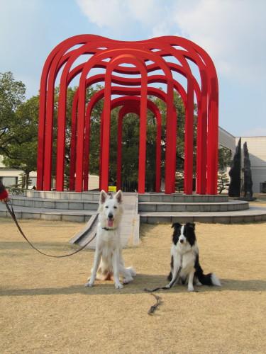 ホワイトスイスシェパード ビオラと、ボーダーコリー メル、福山美術館にて