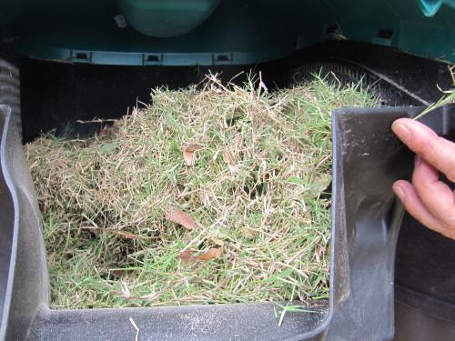 刈り取った芝