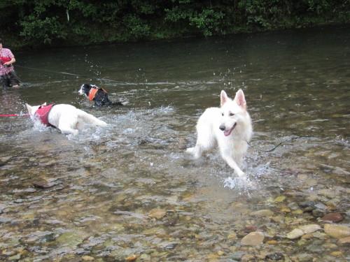 川の中の ジャック と ビオラ と ヴァルター