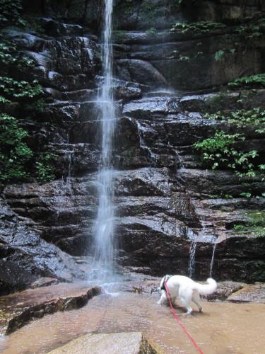 滝壺の中の ホワイトスイスシェパード ビオラ