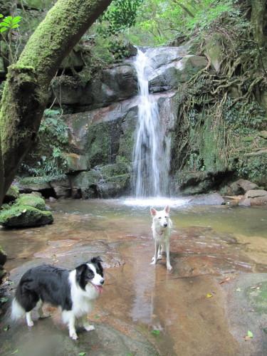 滝の前にて ボーダーコリー メル と ホワイトスイスシェパード ビオラ