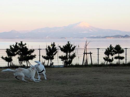 大山と中海を背景に ホワイトスイスシェパード ヴァルター と ビオラ