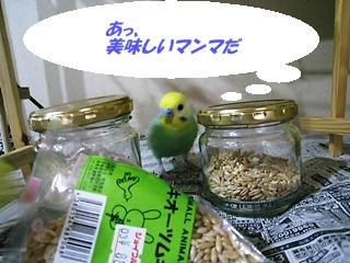 IMG230325_1.jpg