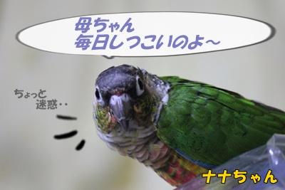 IMG261104-1.jpg