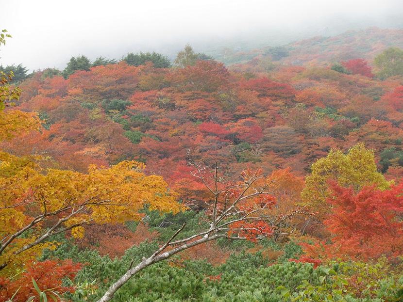 20111009那須岳トレッキング (21)
