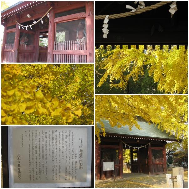 20111130真福寺仁王像&大銀杏