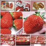 20120121いちご苺イチゴ
