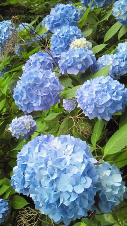 moblog_4ce87dda.jpg
